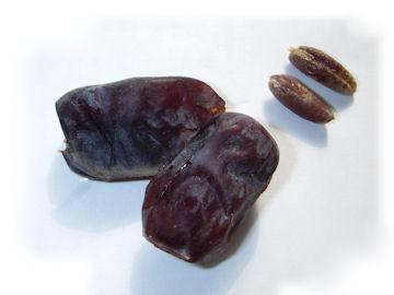 ナツメヤシの種子と実(棗椰子)