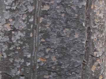 コパールノキの樹皮(コパールの木)